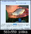 Нажмите на изображение для увеличения.  Название:мабуна.jpg Просмотров:473 Размер:108.3 Кб ID:105714