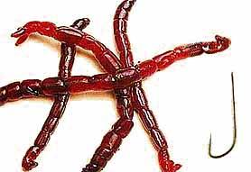 http://www.matchfishing.ru/images/articles/bn_005/008.jpg
