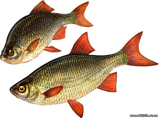 прикормка для рыб дунаев